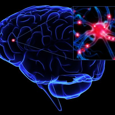 New-Type-of-Human-Brain-Cell-Discovered-1
